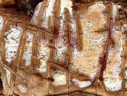 Lai Chi Wo Nature Trail - beautiful sedimentary rocks