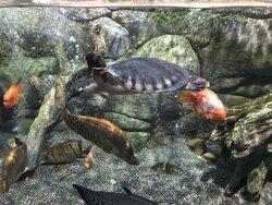 Симпатичный аквариум