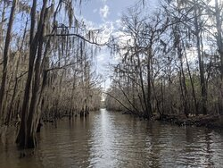 """Winter is a time of year when the trees are """"bald.""""  It's such an eerie sight with the spanish moss hanging."""
