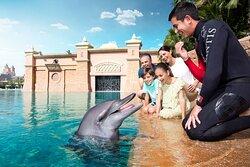 Dolphin Meet & Greet