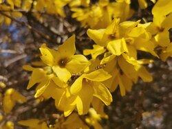Las flores de la primavera.