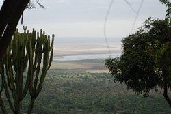 """Souvenirs de mes Voyages --- Tanzanie -- Dans le Parc National du Lac Manyara  situé au nord de la Tanzanie se trouve le lac dont la superficie varie selon les saisons et peut parfois être pratiquement asséché - Tout autour la faune est abondante et l'on peut observer les plus grandes concentrations de singes d'Afrique """" Babouin - Singes Vert - Singes Bleu """" -- 21.03.21"""