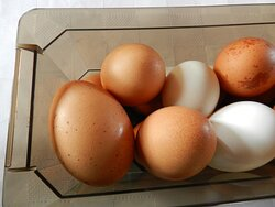 Fresh eggs from our happy hens