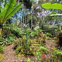 Kona Cloud Forest
