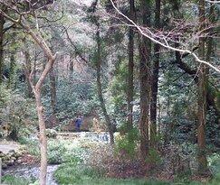 熊本県阿蘇郡産山村は、自然に恵まれた美しい村です。池山水源は深い木立ちの中に静かにたたずんでいます。以前はよく訪れていましたが、十数年ぶりに行きました。🌲 Ubuyama Village, Aso District, Kumamoto Prefecture, is a beautiful village blessed with nature. The Ikeyama Springhead stands quietly in a deep grove. I used to visit it a lot, but I went there for the first time in more than a dozen years.