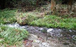水源の池からは清らかな水が流れ出ています。池山水源は毎分30トンの湧出量があります。日本の名水100選に指定されています。🌲 Pure water flows from the source pond. The Ikeyama water source has a discharge rate of 30 tons per minute. It is designated as one of the 100 best waters in Japan.