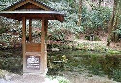 水源の池です。🌲 It is a water source pond.
