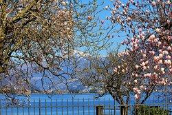 Lago di Lugano, 23 Marzo 2021.