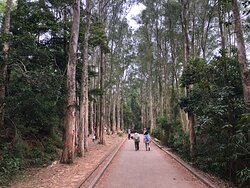 Shing Mun Country Park - entering the Paper-bark forest area