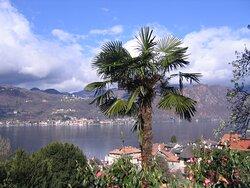Orta San Giulio, Lake Orta with palm tree