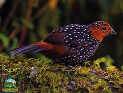 Ecuador Birds Tours