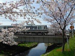 佐保川沿い桜並木 景観一例 2021年3月27日撮影