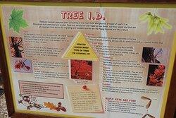 Tree I.D.