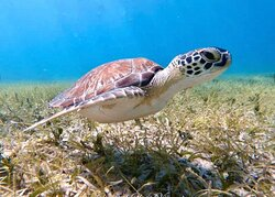 We saw this turtle munching on grass!