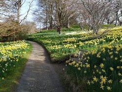 Bodnant Garden is open  now.  I was so happy  to visit it last week.   😃