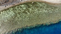 Our amazing reef from the top