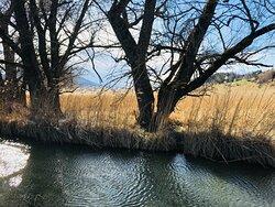 Murnauer Moor