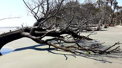 Boneyard Beach -- a picturesque water-stranded forest excellent for collecting shells, photos, and memories.