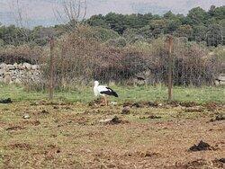 Una cigüeña en el campo.