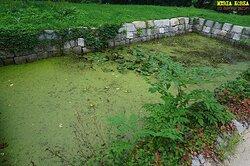 연못 물이 식물로 덮인 모습