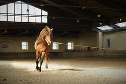 Traditional horse-breeding center from the 18th century. From a lipizzaner to an icelandic pure-bred horse.