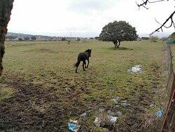 Bonito caballo 🐴 🐴 en el campo.