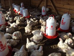 Invited to chicken firm as A adviser  on solar system that can power lights for the chicken barn