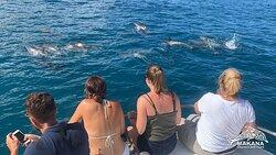 Friendly hawaiian spinner dolphins everyday!