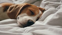 We are a pet friendly hotel!