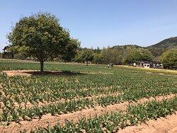 世羅高原農場の様子です。(時系列で撮りました)
