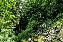 大雪山国家森林游乐区