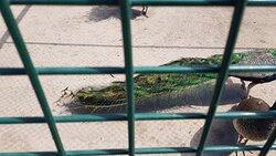 Sincan Evcil Hayvanlar Parki