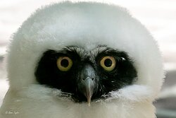 A chance to watch the cutest baby owls ever!