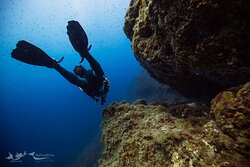 Be Free 2 Dive