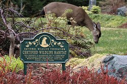 Ambiance B&B is a Certified Wildlife Habitat