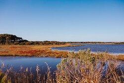 Chincoteague Wildlife Refuge