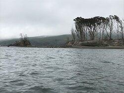 Hog Island, with many little dots representing marine mammals