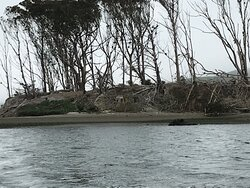 Hog Island's abandoned home from the 19th century