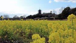 備中国分寺(岡山県総社市) ⇒ 岡山県唯一の五重塔と梅林の競演が美しい名刹