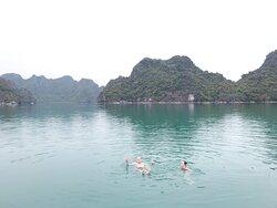 Blue Swimmer Venture