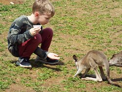 I hope the parents visit this site; the kidz were so cute with the joey.