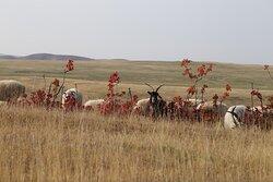 Udabno- Georgian Desert