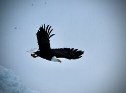 I have 3,000 decent eagle photos from this trip!