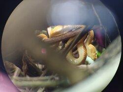 Snake in Cahuita