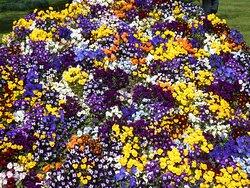 Many-coloured flowers Mozirski gaj