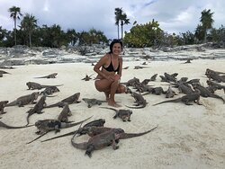 Iguana's beach