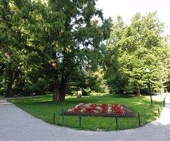 Blumen und alte Bäume.