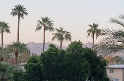 View from our balcony of mountains and palms.  Very relaxing