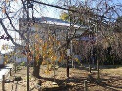 境内の枝垂れ桜。季節外れでしたけど良い感じですね。春に見たいです。