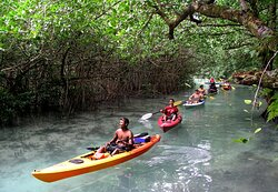 Motor-less kayaks certainly have their benefits, as rising tides carry us through a mile-long, winding mangrove forest channel. As we slip effortlessly through this unique clear water river, the forest resonates with the calls of our endemic birds. Kingfishers, Palauan Flycatchers, and Fruit Doves can all be seen and heard while drifting past the overhanging mangrove forest trees. Website: http://paddlingpalau.net/